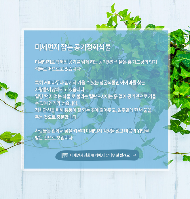 미세먼지 잡는 공기정화식물