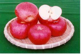 사과(양광)