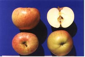 사과(세계일)