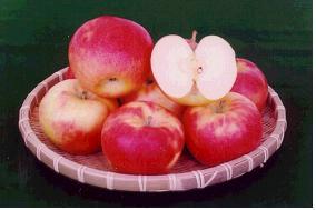 사과(조나골드)